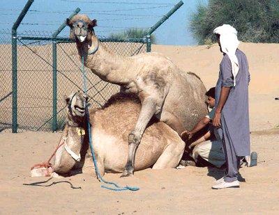 Dubai -Semen Collect