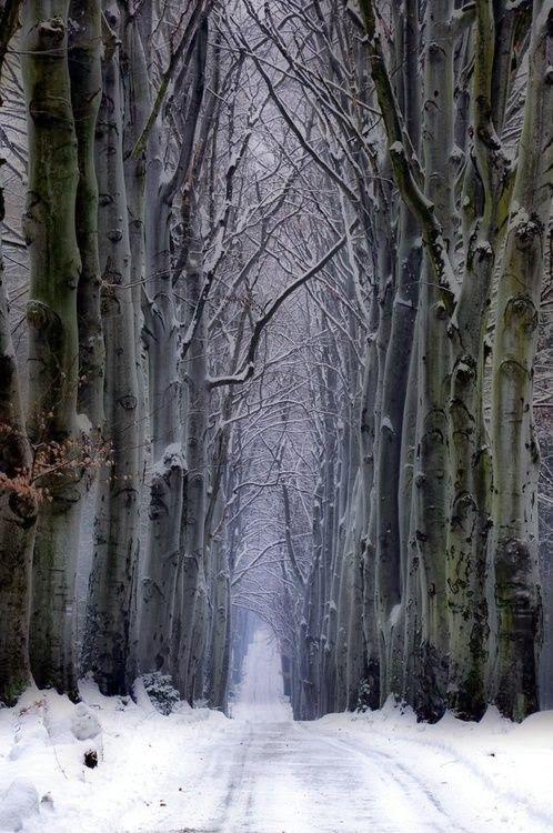 Czech Republic -Snow forest