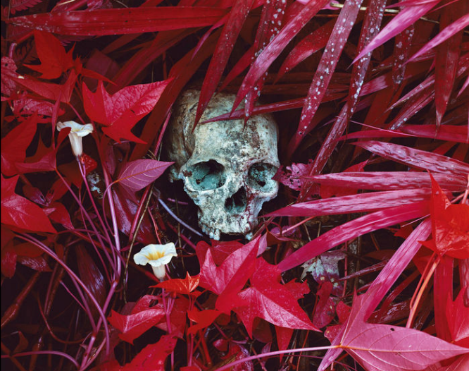 Congo -Serie Infra -Richard Mosse photography